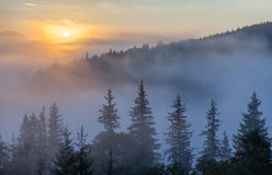 Fog over mountain range in sunrise light. Morning sun rays through the fog over mountain slopes, covered with spruce forest stock photography