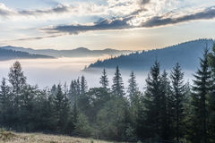 Fog over mountain range in sunrise light. Morning sun rays through the fog over mountain slopes, covered with spruce forest royalty free stock photography