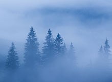 Fog Over Pine Tree Forest Royalty Free Stock Image