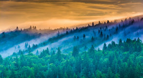 Fog over pine trees at sunrise, seen from Devil's Courthouse, ne Royalty Free Stock Image