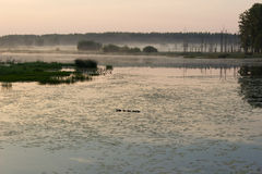The fog over the pond Royalty Free Stock Photos