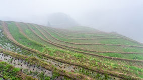 fog over rice terraced fieilds Royalty Free Stock Image