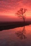 Fog over the river. Colorful misty dawn over the small river Stock Photo