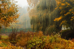 Fog over river in forest in the autumn Stock Photo