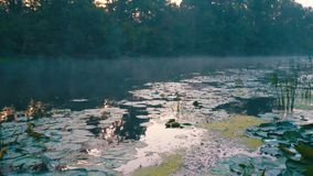 Morning fog over river. Fog over river in the forest at early morning in summer stock video