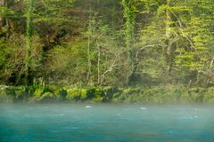 Fog over river in a forest in spring. Fog over river Drina in a forest stock images