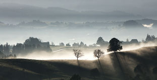 Fog over rural landscape