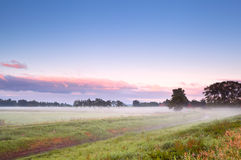 Fog over summer meadow in sunrise Stock Images