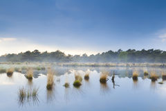 Fog over swamp in Drenthe Royalty Free Stock Image