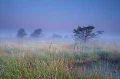 Fog over swamp at sunrise Royalty Free Stock Photos