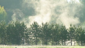 Fog over trees stock footage