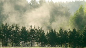 Fog over trees Time Lapse. Mist rises over the trees. Dawn.. Video stock footage