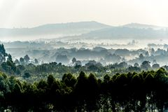 Early morning mist over plantations, fields and hills in Uganda Royalty Free Stock Photography