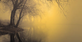 Fog over water in the spring in the early morning. Royalty Free Stock Images
