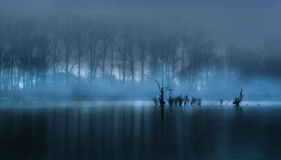 Fog over the water surface Stock Photography
