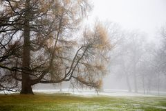 Fog in the park Stock Images