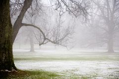 Fog in the park Royalty Free Stock Images