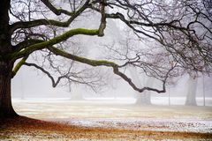 Fog in the park Stock Photos