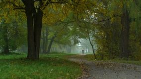 Fog in the park alley and silhouette man stock video