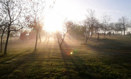 Fog in the park. The sun shines through the trees covered by the fog Royalty Free Stock Photography