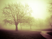 Fog in the park Royalty Free Stock Photo
