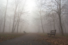 Fog in park. Winter , fog , cold weather in park Royalty Free Stock Photos