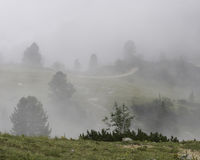 Fog and path. Hiking through the Bavarian Alps of Southern Germany royalty free stock image