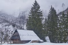 Fog on the peaks and in the mountain valley with spruces, an old cottage with a stack of firewood, stock photo
