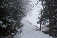 Through the fog. This picture was taken during a hiking in the Bisse du millieu (a path through the forest) in the station ski of Haute-Nendaz wen suddenly the Stock Image