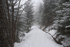 Through the fog. This picture was taken during a hiking in the Bisse du millieu (a path through the forest) in the station ski of Haute-Nendaz wen suddenly the Stock Photo