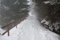 Through the fog. This picture was taken during a hiking in the Bisse du millieu (a path through the forest) in the station ski of Haute-Nendaz wen suddenly the Royalty Free Stock Photography
