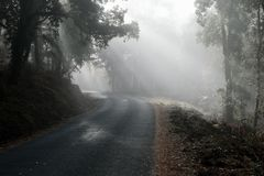 Fog piercing through forest onto a spanish road royalty free stock image