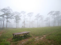 Fog pine forest Stock Photo