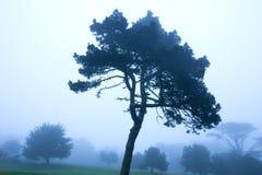Fog on Presidio neighborhood, San Francisco royalty free stock images