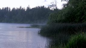 Fog rain and birds over a lake. Foggy lake with birds grass and trees on a rainy day stock footage