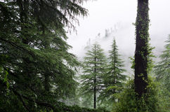 Fog after rain in wild forest Royalty Free Stock Photography