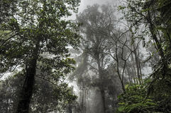 Fog in the rainforest Royalty Free Stock Image
