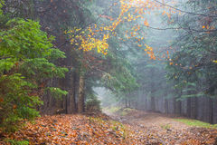 Fog in rainy forest. Autumn landscape Royalty Free Stock Photo