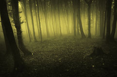 Fog rising in dark forest at morning Royalty Free Stock Image