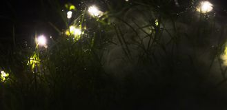 Fog rising from ground through grass lit with fairy lights stock images