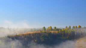 Fog is rising over woods Stock Images