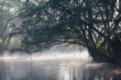 Fog river. Fog over the river in Poland Stock Photo