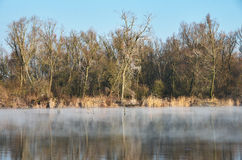 Fog on the river. Frosty morning. Frosted tree Stock Photography