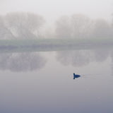 Fog at the river Royalty Free Stock Image