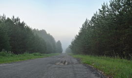 Fog on the road early in the morning 2 Royalty Free Stock Photo
