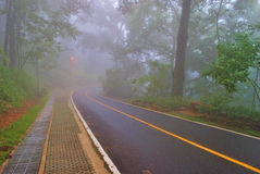 Fog road. Fog on the road in the forest Royalty Free Stock Images