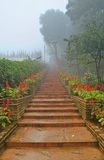 Fog road. Fog on the stair in the forest Stock Photo