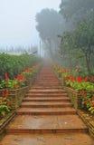 Fog road Stock Photo