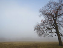 Fog rural background with leaning winter tree royalty free stock image