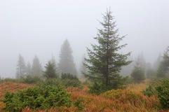 Fog's tree Royalty Free Stock Photos